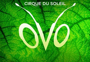 Cirque du Soleil - шоу Ovo