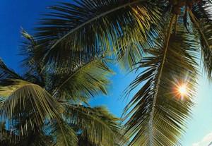 Балеарские острова. Майорка